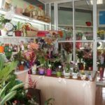 Магазин комнатных растений
