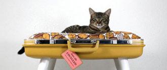 Изготовление мебели для кошек и собак