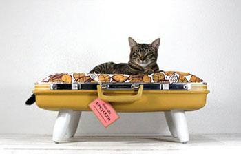 Изготовление-мебели-для-кошек-и-собак