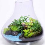 florarium-sad-v-butilke-