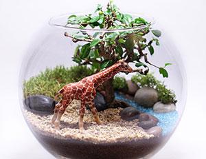 сад в бутылке или флорариум