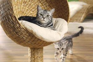 игровая площадка кошке