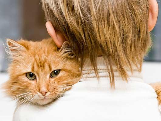 на руках с любимой кошкой