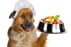 диетолог для домашних животных
