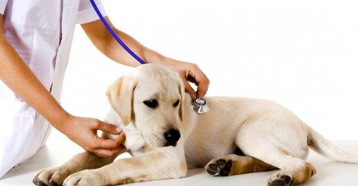 обследование в ветеринарной клинике